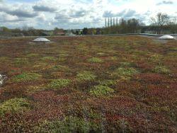 Subsidie voor een groendak of sedumdak in Groningen