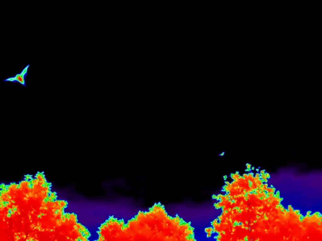 Energiekeurplus brengt vleermuizen in duidelijk beeld met thermografie